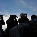Fyra ungdomar spanar efter sträckande fåglar
